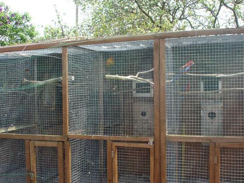 Aviary Designs